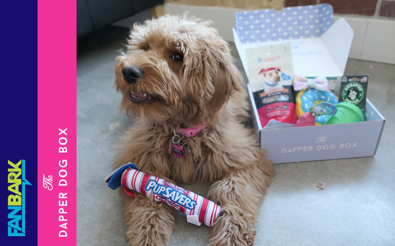 """FanBark Unboxing: The Dapper Dog Box """"Foodie Box"""" Review"""