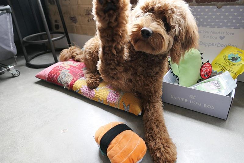 FanBark: Fozzie and The Dapper Dog Box
