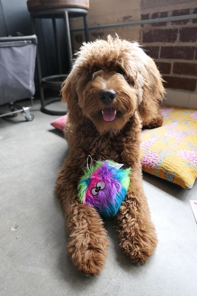 PupBox April 2018