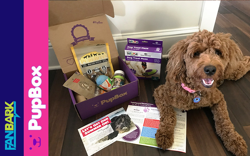FanBark Unboxing: PupBox 11-Month Review Time!