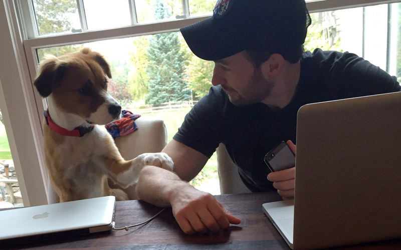 Celebrating 'Superpower Dogs' with our Favorite Chris Evans and Dodger Pictures