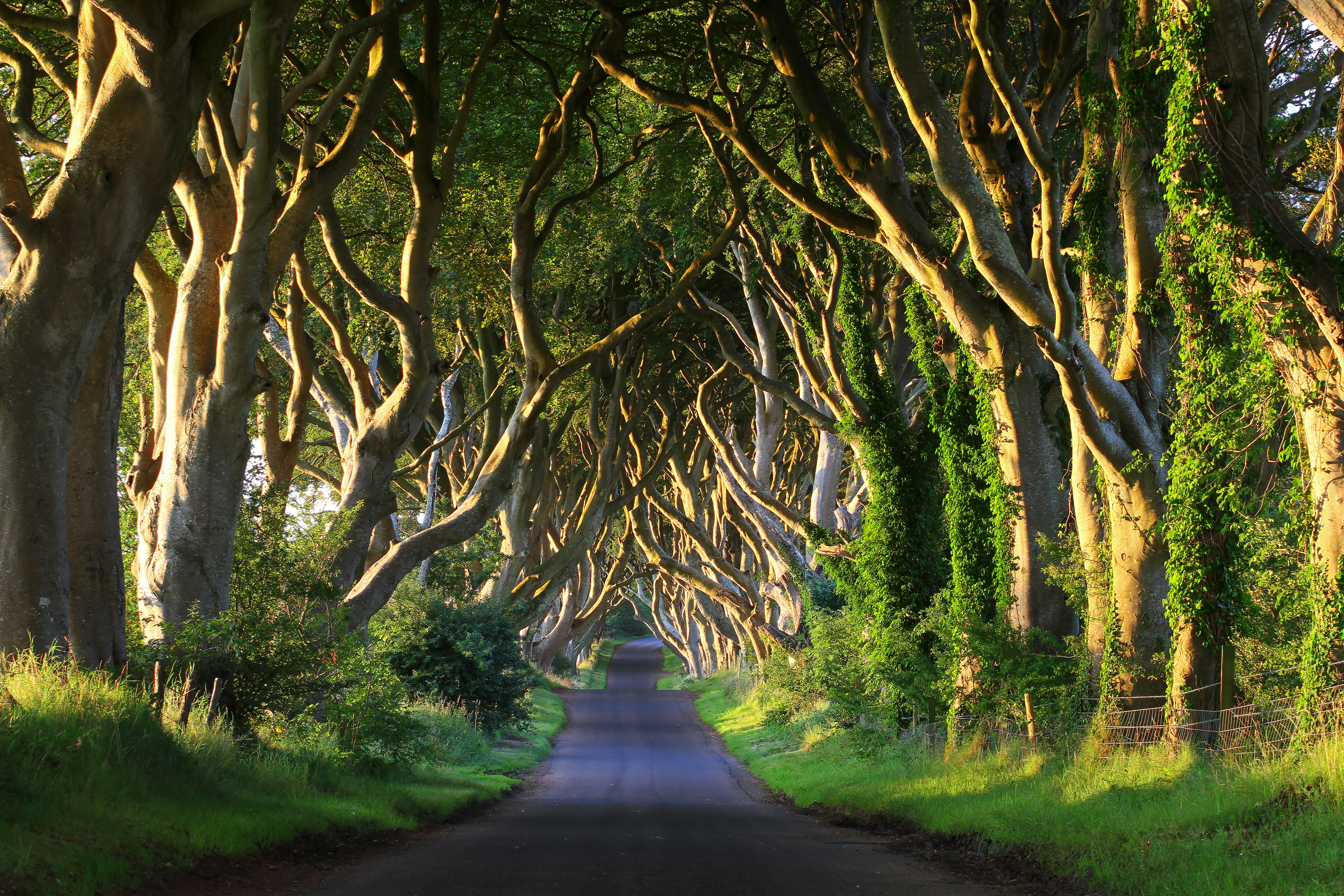 Game of Thrones Travel Guide: The Dark Hedges